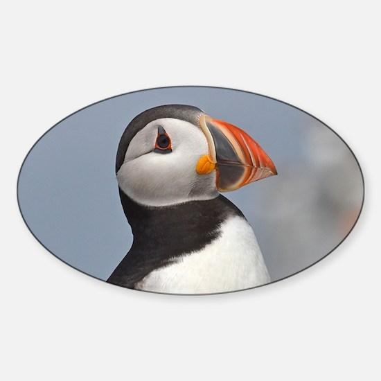 Puffin Sticker (Oval)