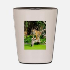 Ready for success Tiger - Copy (3) Shot Glass