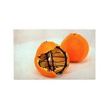 Orange steel 3'x5' Area Rug