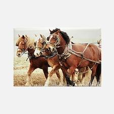 Funny Percheron horses Rectangle Magnet
