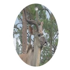 Greater Kudu series 2 Oval Ornament