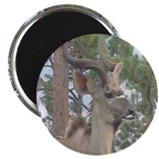 Greater Kudu series 2 Magnet
