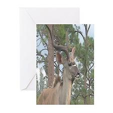 Greater Kudu series 2 Greeting Cards (Pk of 10