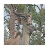 Kudu Drink Coasters