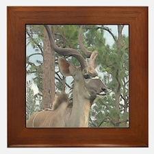Greater Kudu series 2 Framed Tile