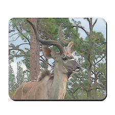 Greater Kudu series 2 Mousepad