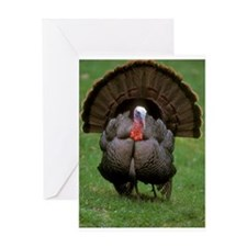 Turkey Greeting Cards