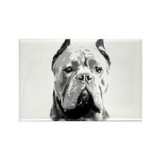 Cane Corso Dog Magnets
