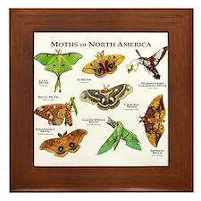 Moths of North America Framed Tile