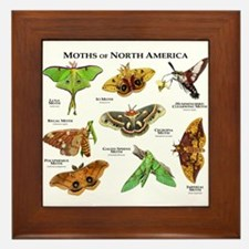 Moths of North America Framed Tile