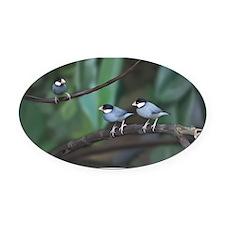 Java Sparrow Oval Car Magnet