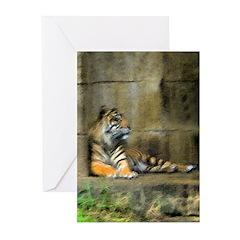 sumatran tiger Greeting Cards (Pk of 10)