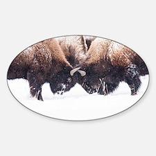 Buffaloes Decal