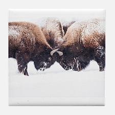Buffaloes Tile Coaster