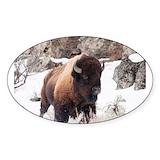 Buffalo 50 Pack