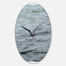 gull Oval Decal