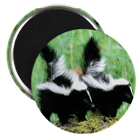 Two Skunks Magnets