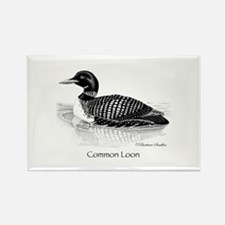 Common Loon Rectangle Magnet