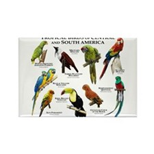 Tropical Birds of Central and South America Rectan