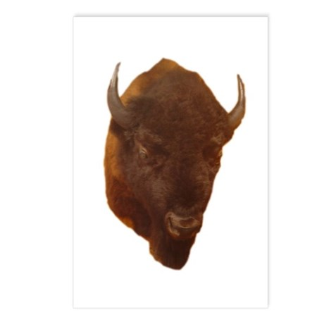bison head Postcards (Package of 8)