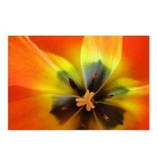 Georgia Tulip Postcards (Package of 8)
