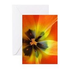Georgia Tulip Greeting Cards