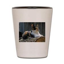 calico-cat Shot Glass