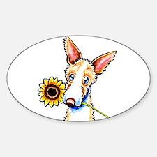Sunny Ibizan Hound Sticker (Oval)
