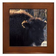 Buffalo Framed Tile Young Bull