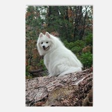 White Fang Postcards (Package of 8)