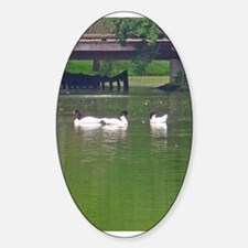 black-headed swans Oval Decal