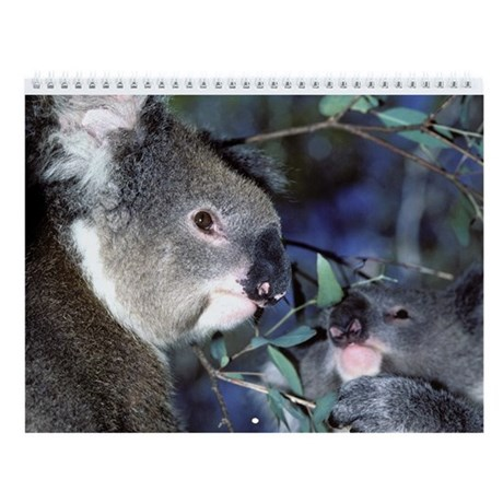 Koala Bear 2014 Wall Calendar (13 Images)