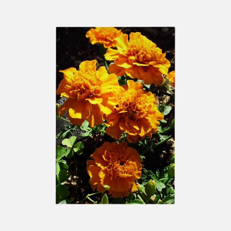Autumn Marigolds Magnets