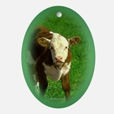 Hereford Calf Oval Ornament