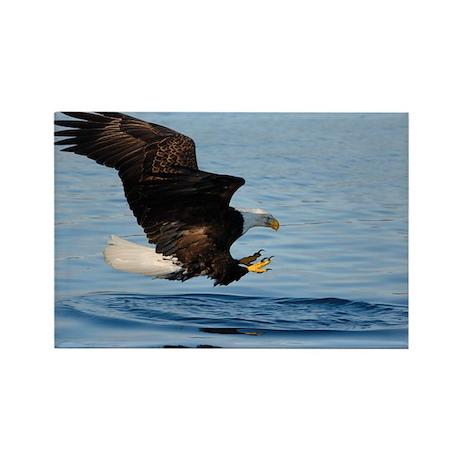 Bald Eagle Fishing Rectangle Magnet (10 pack)