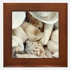 Beach Shells Assortment Framed Tile