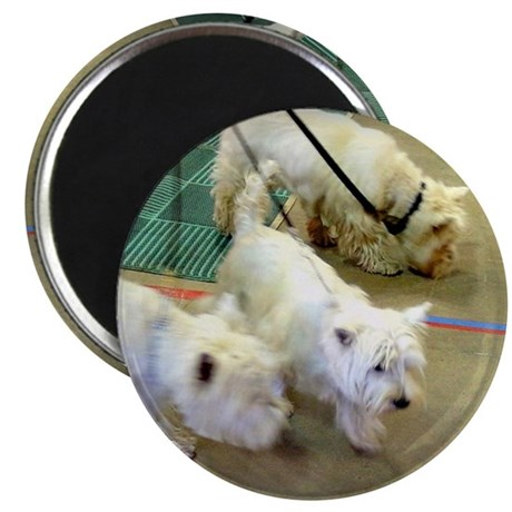 Walking Westies Magnet