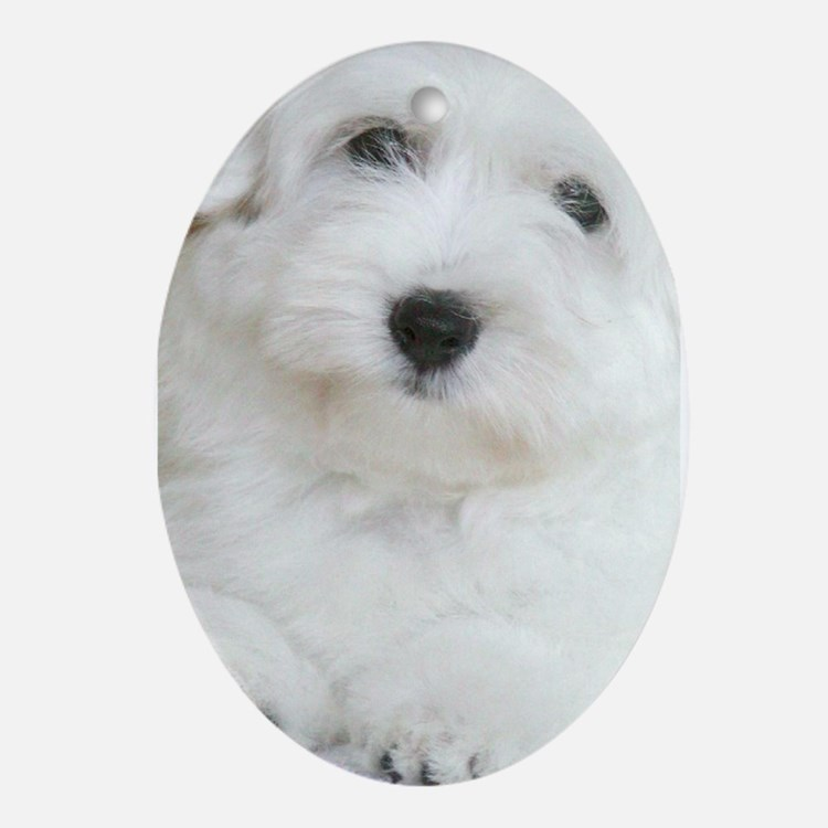 Coton de Tulear Oval Ornament