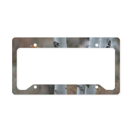 BIRD FROM CONVICT LAKE License Plate Holder