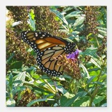 "Monarch Butterfly Square Car Magnet 3"" x 3"""