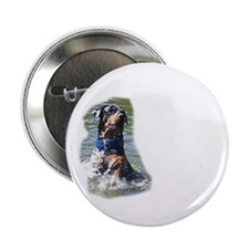 """Thor (Rottweiler) swimming  2.25"""" Button"""