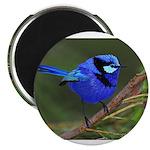 Blue Wren Magnet