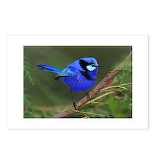 Blue Wren Postcards (Package of 8)