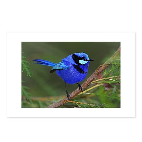 Blue Wren Postcards (Package of 8)