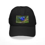 Blue Wren Black Cap