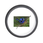 Blue Wren Wall Clock