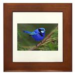 Blue Wren Framed Tile