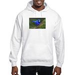 Blue Wren Hooded Sweatshirt