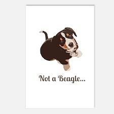 Not a Beagle - Entlebucher Mtn Dog Postcards (Pack