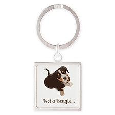 Not a Beagle - Entlebucher Mtn Dog Keychains